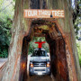 Drive Through Big Redwood Tree in Avenue of the Giants tour